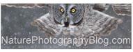 naturephotographyblog